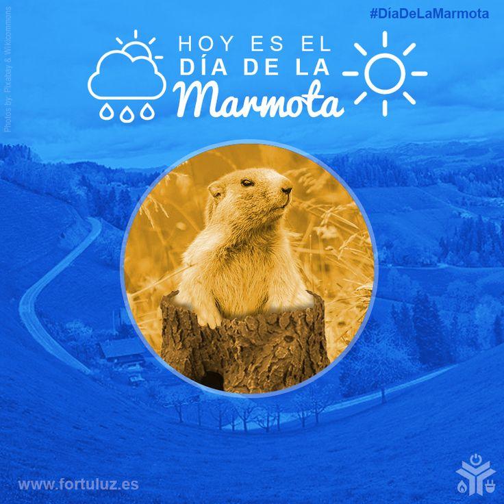 """El día de 2 de febrero es un día especial llamado """"el día de la marmota"""", ya que es el día que si la marmota Phil sale de la madriguera despiertar de su hibernación. #diadelamarmota Si el cielo está cubierto de nubes, Phil se quedará a disfrutar del aire libre y la primavera llegará pronto. Pero si, por el contrario, la marmota se topa con su sombra, día soleado, se retirará a su madriguera para una nueva siesta y el invierno durará 6 semanas más.  www.fortuluz.es #buenasenergías"""