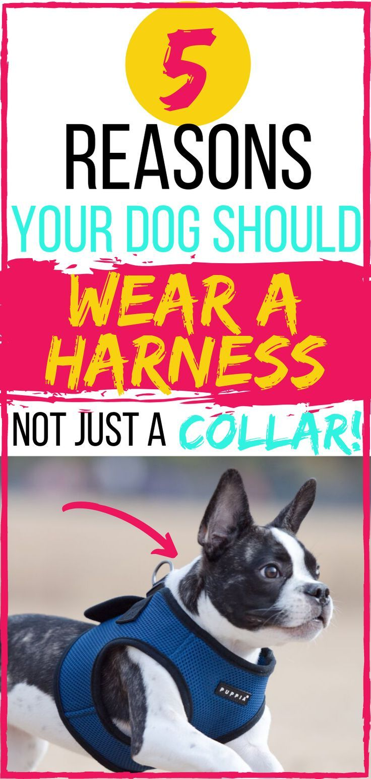 5 Shocking Reasons Your Dog Needs To Wear A Harness Dog Harness
