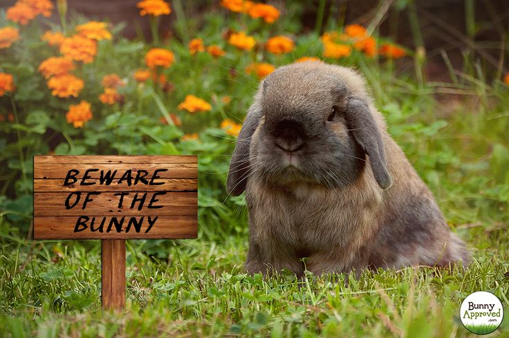 Beware of the Bunny!