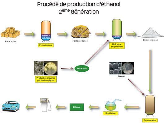 Biocarburants : les microalgues, un défi énergétique pour demain ?