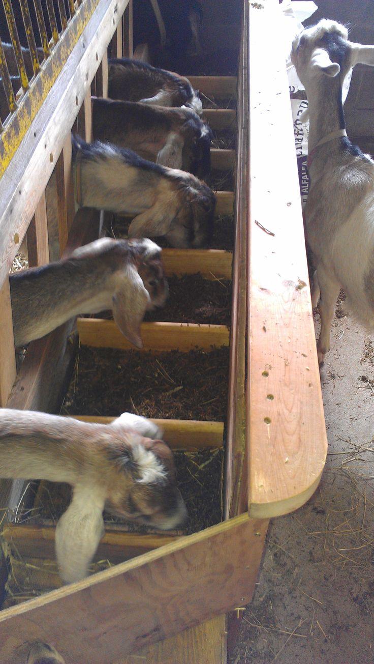 Goat feeder homemade goats and the goat on pinterest