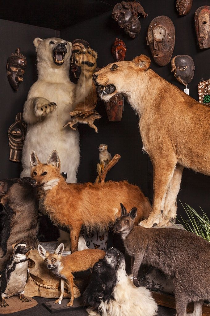 The artist Viktor Wynd is a collector with no apparent filter – taxidermy, human remains, giant beans and McDonald's Happy Meal toys all form part of his collection