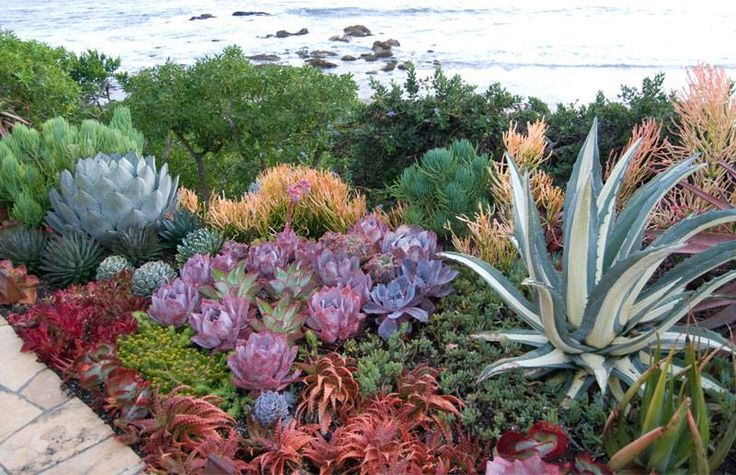 Seaside succulent garden. For part of the bank?