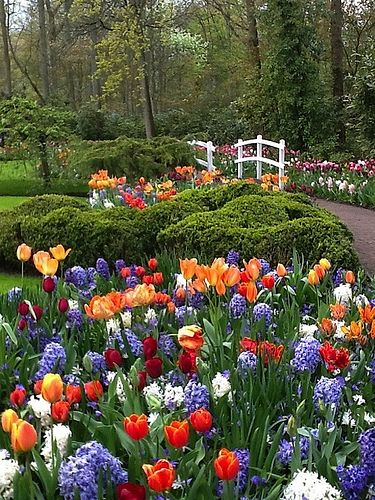 Kuekenhof flower walk, The Netherlands.  Got to be there in the spring when this was in all for its beauty.  This area goes on for miles and I never got tired of it.