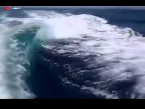 Katil balinalar tekne kovaladı