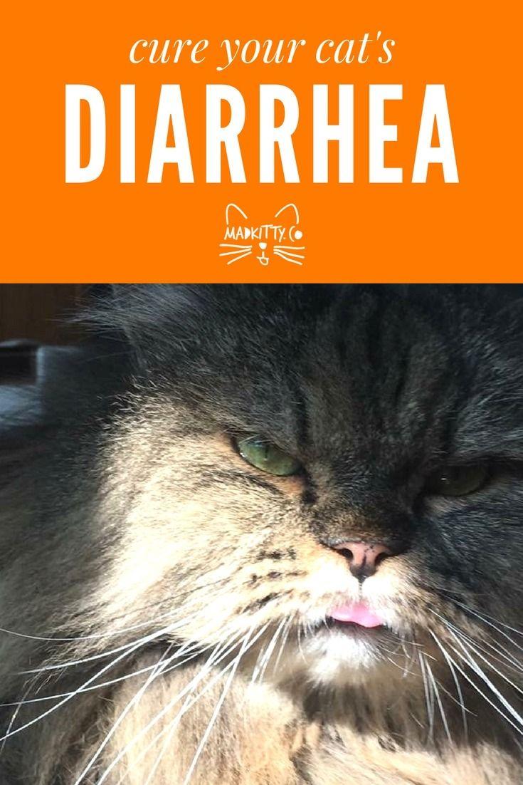 25+ Best Ideas About Cat Diarrhea On Pinterest Pet Health, Coconut Oil For  Cats