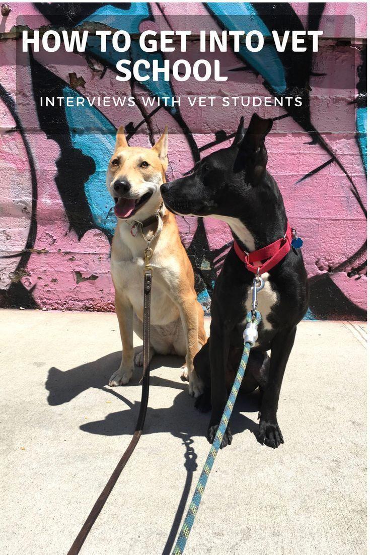 Low Cost Dog Dental Care Near Me Bernesemountaindog Vet School Puppy Training Vets