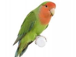 Op onze dierenafdeling vindt u een assortiment voor uw vogel als huisdier, denk bijvoorbeeld aan een parkiet, maar ook aan de vogels buiten is gedacht.  Voor vogelhuisjes, voederschalen, nestkastjes, spiegeltjes, vogelbadjes en allerlei aanverwante artikelen kunt u terecht in ons tuincentrum.