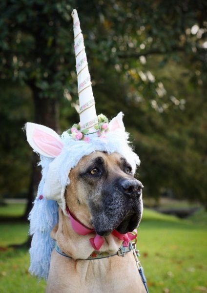 Unicorn great dane dog costume