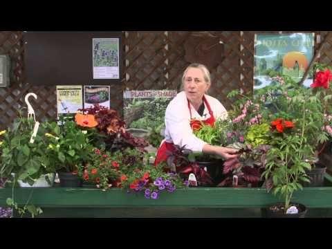Carol's Favorite Plants at Behnke Nurseries