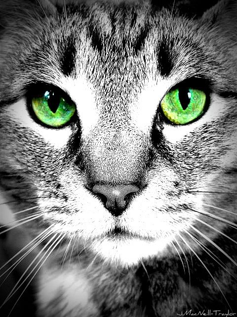 Green Eyes by gypsymarestudios, via Flickr