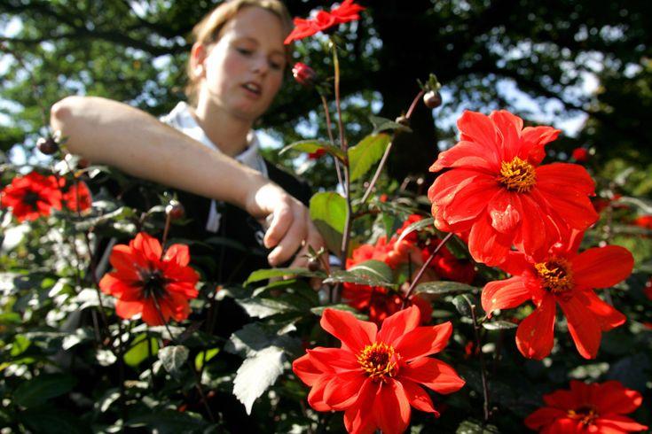 Crea un'oasi colorata sul tuo balcone con le piante che possono arrivare fino a un metro di altezza. Vengono dai Paesi caldi e sono generose. Segui i nostri consigli, le vedrai crescere e fiorire in poche settimane