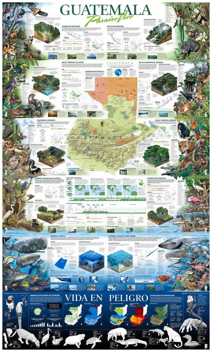 Guatemala: Paraiso vivo #infografia #infographic