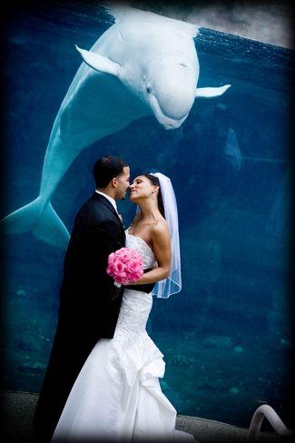 mystic-aquarium-wedding http://www.marketplaceweddings.com/blog/unique-wedding-venues/