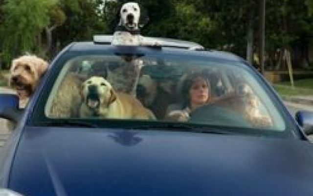 I consigli del veterinario per viaggiare con il tuo cane #viaggiocolcane #viaggiarecolcane