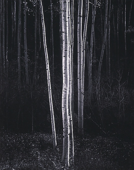Aspens, Northern New Mexico / Ansel Easton Adams / ca. 1958, printed 1978 / at the Met: Inspiration, White Photography, 1958, Beautiful, Anseladam, Trees, Ansel Adams, Adam Aspen, New Mexico