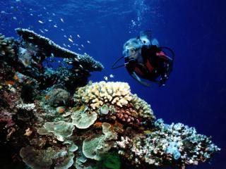 #Vanuatu Diving Information. #Holidays #Adventure #Beaches #Vacations