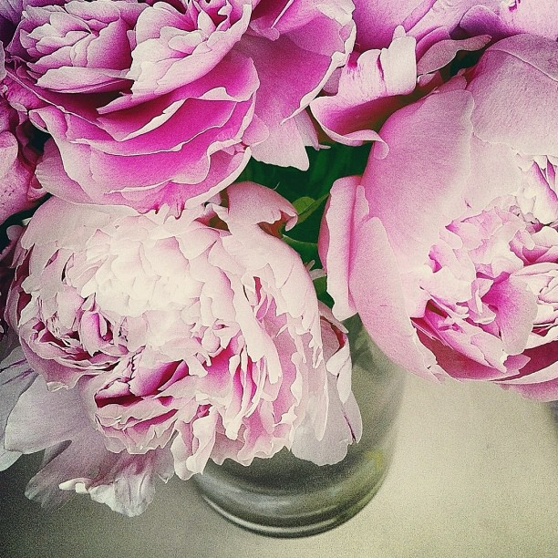 Peonies... one of my all time favorite flowers!