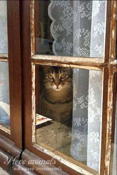 Кошки создают уют в доме как никто другой.