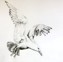 seagull drawing - Google Search