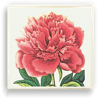 Ben's Garden decoupages vintage images in a fresh way. Pink Peony Glass Tray, $56