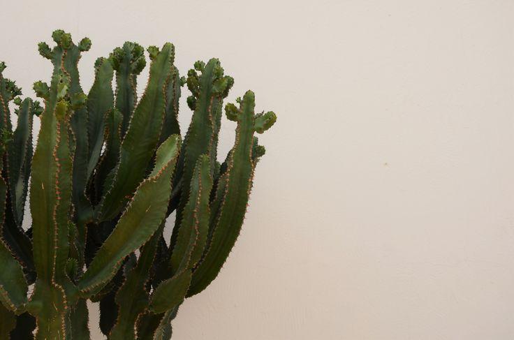 love cactus. Copyright.