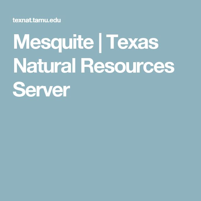 Mesquite | Texas Natural Resources Server