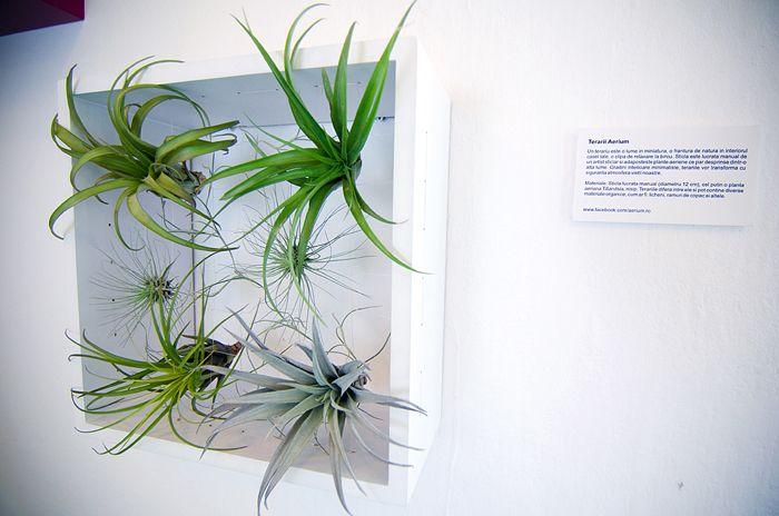 Terarii Aerium: grădini în miniatură, cu plante aeriene. Un proiect de Ramona Bejan.