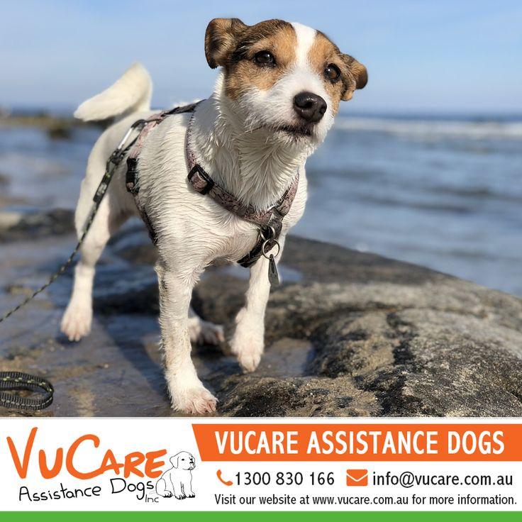 #Dogs #Pets #VuCare #DogsAssistance #Dog #DogOnDuty #Puppyfriend #Puppyparent #DogCare #ServiceDogs #DogsForDisabilities