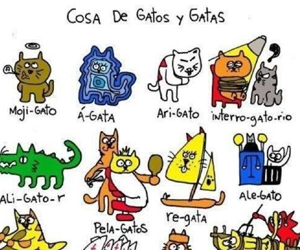 Los Gatos y Las Gatas estan en Todo!
