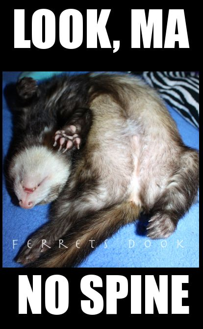 * * LOOK FERRET - NO SPINE, YOU'RE NOT FINE. GRAVE BE FRESHLY DUG.