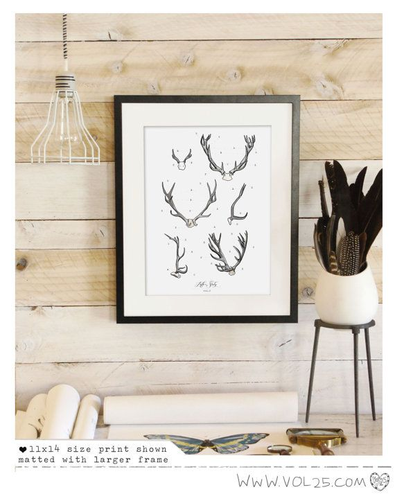 Vintage Inspired Science Print  Antler Study Vol.2 by vol25, $20.00