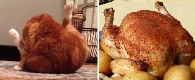 15 Unexpected Things That Look Freakishly Similar to Each Other