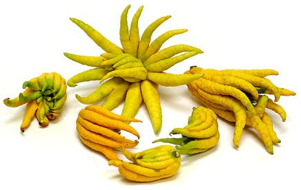 Fingered citron, also known as the Buddha's Hand, has been a staple of diets in China and Japan for centuries. The rind and white flesh are edible and often served candied, while the center-most part of the fruit is sour and usually goes uneaten #exotic #banana #places