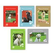 Guide Dog Christmas Cards Guide Dog Shop