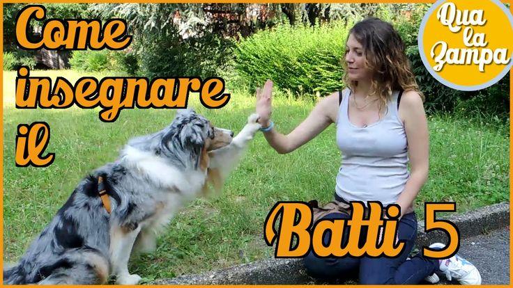 Addestramento/Educazione cani n° 19: Come insegnare il BATTI 5   Qua la ...