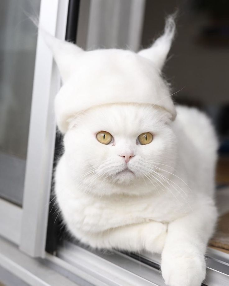These Cats In Hats Made From Their Own Hair Are Completely Adorable