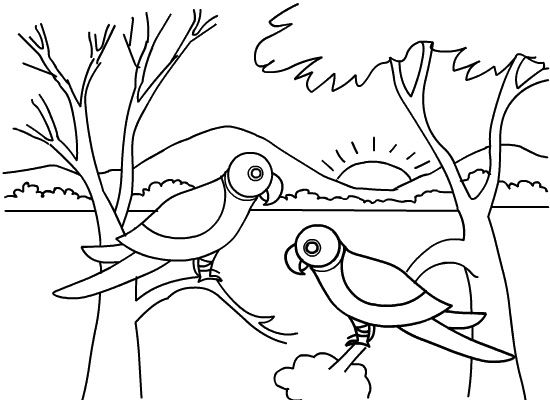 Jungle Animals Coloring Pages For Toddlers Coloring Pages