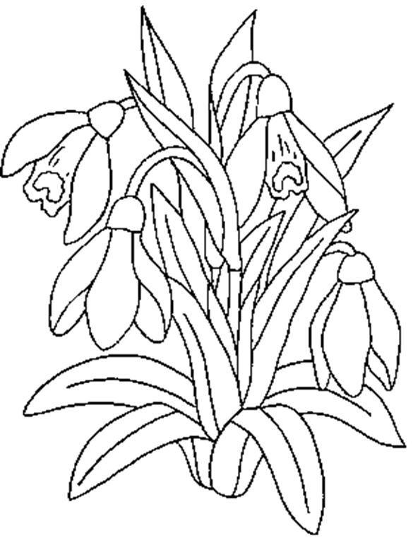 Image Result For Ghiocelul Plansa De Colorat C Desene