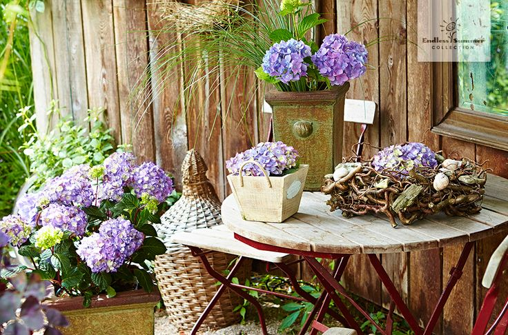 12 best shabby chic images on pinterest hydrangeas decorating ideas and floral arrangements. Black Bedroom Furniture Sets. Home Design Ideas