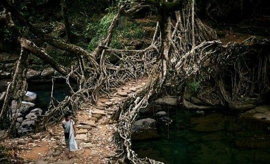 Jembatan akar di Meghalaya, India