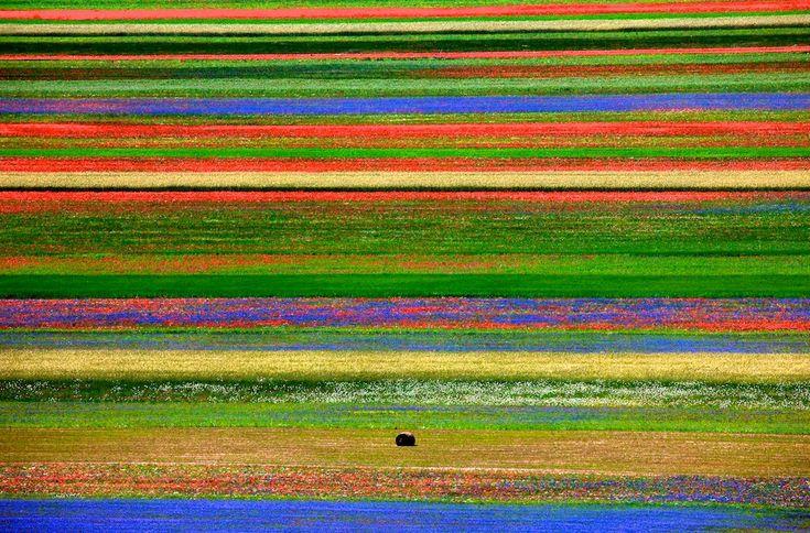 The Plains of Castelluccio | Italian Ways