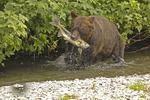 Hunters and Fishermen  Hyder Alaska