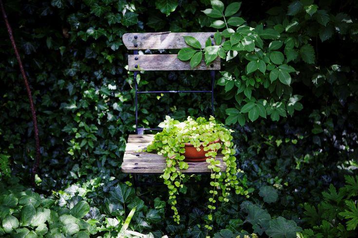 BILDEXTRA: Tio tips för den lilla trädgården - Sydsvenskan