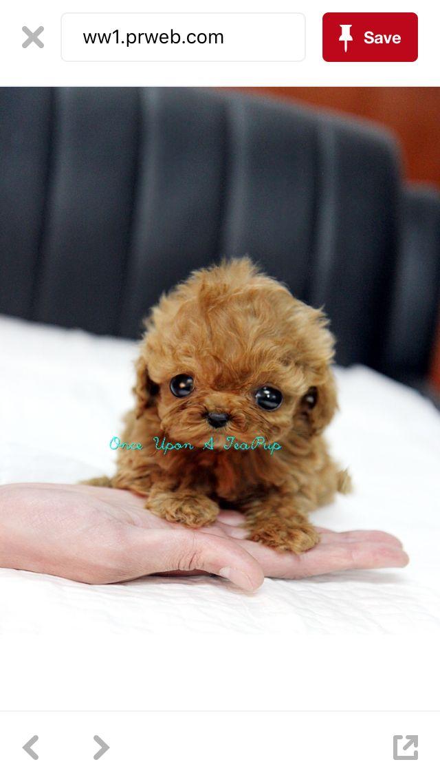 So cute ❤️🐶