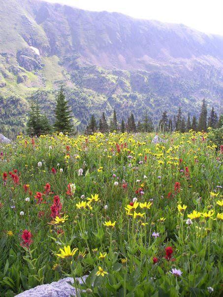 Flowers at Diamond Lake Trail