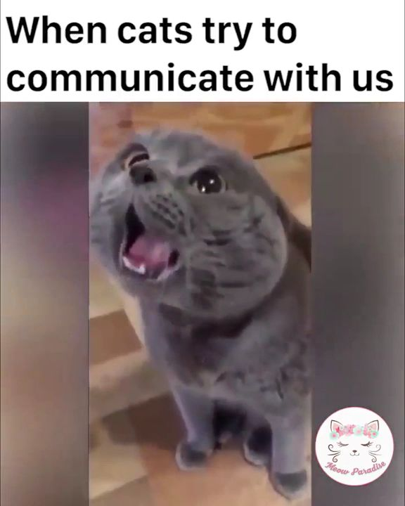 Cats trying to communicate