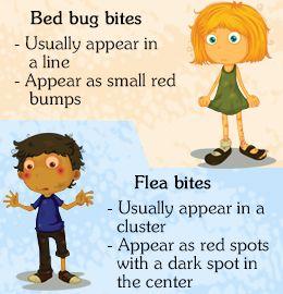 25 unique Bed bugs bites ideas on Pinterest