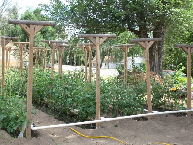 Tomato Trellis Ideas Part - 38: Tomato Trellis | Tomato Trellis Idea