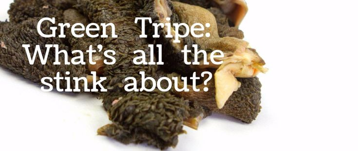 Many of the benefits of green tripe are overstated, but that doesn't mean you shouldn't consider adding green tripe into your dog's diet.